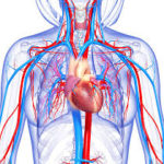 Technology is the Circulatory System of the School